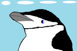 Black the Chinstrap Penguin