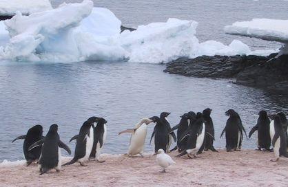 File:Penguins on Gourdin Island.jpg