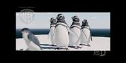 Strike - Little penguin walking away from Magellanic penguins