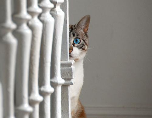 File:Dramatic kitten.jpg