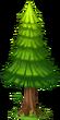 Fir Tree (seaside)