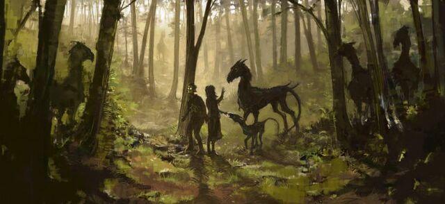 File:Thestrals WB F5 ThestralsHarryAndLunaInTheForest Illust 100615 Land.jpg