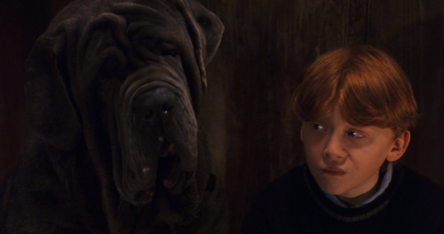 File:Ron and Fang.png