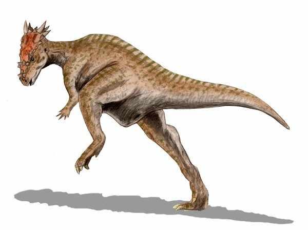File:Dracorex.jpg