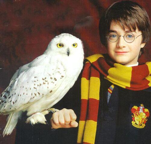 File:Harry-Potter-Hedwig.jpg