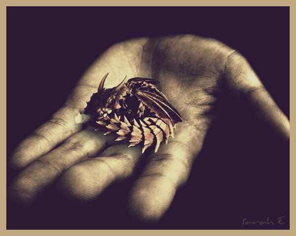 File:Horned Baby Dragon.jpg