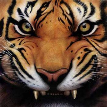 File:Tiger Growl.jpg