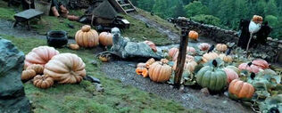 Pumpinks Hagrid POA 1.jpg