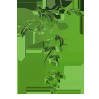 File:Poison-ivy-lrg.png