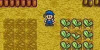 Crops (SNES)