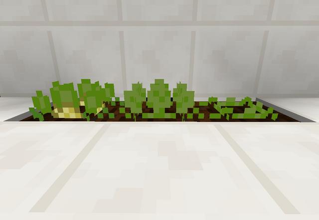 File:Cantaloupe.png