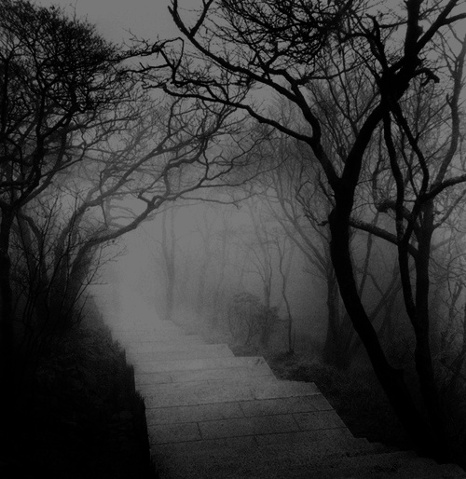 File:Creepy walk way in forest.jpg