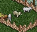 Овца (Sheep)