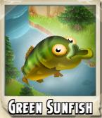 Green Sunfish Photo