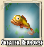 Greater Redhorse Photo