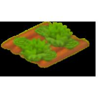 File:Lettuce Stage 5.png