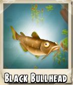 File:Black Bullhead Photo.png