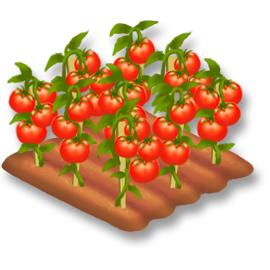 File:Tomato Stage 4.png