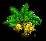 Banana Tree Stage 3