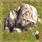 File:Oasis stone.png