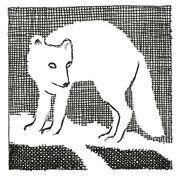 Amber Spyglass chapter 3 Artic Fox