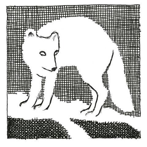 File:Amber Spyglass chapter 3 Artic Fox.jpg