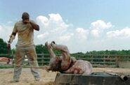 Walking Dead 2x04 009