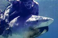 Zombie vs. shark