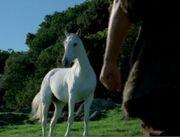 Herccatchesthehorse