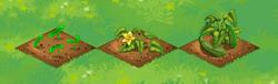 Farm-Zucchini 123