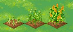 Farm-Corn 123