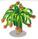 Dragonfruit Tree