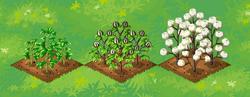 Farm-Cotton 123