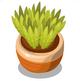 Spiky Green Pot Plant