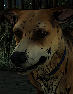File:Sam the Survivor Dog.png