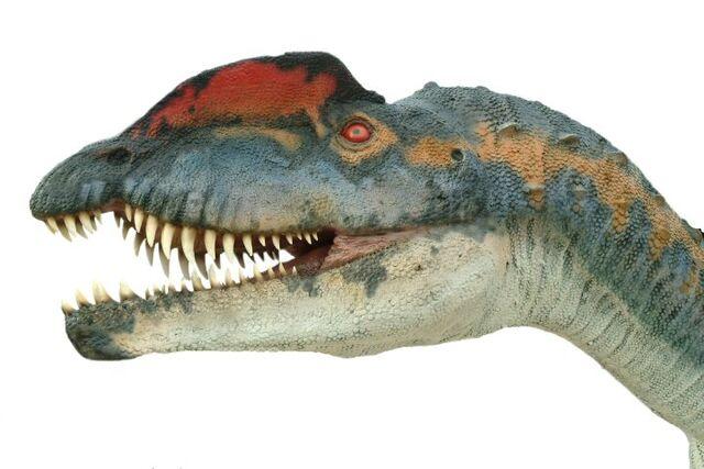 File:Dilophosaurus029.jpg
