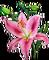 HO BriggsRoseGarden Lily-icon