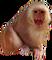 HO SeanceP Monkey-icon