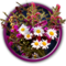 Quest May Flowers-icon