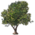 Marketplace Olive Tree-icon.png