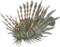 HO UWreck Sea Lion-icon
