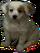 HO SecPavilion Puppy-icon