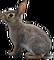 HO BriggsRoseGarden Rabbit-icon