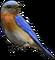HO BriggsRoseGarden Bluebird-icon