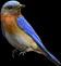 File:HO BriggsRoseGarden Bluebird-icon.png