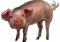 HO VShop Pig-icon