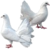 HO CurioS Pigeons-icon