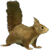 File:HO RomanyCamp Squirrel-icon.png