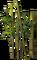 HO GeishaTeahouse Green Bamboo-icon