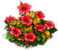 Marketplace Tropical Flowers-icon